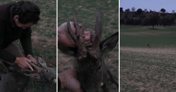 cazador salva la vida a un corzo