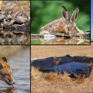 Un cazador a los ecologistas: «Me gustaría veros dar de beber a la fauna con más de 40 grados como nosotros»