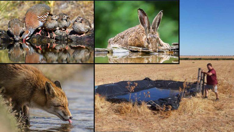 Varias especies bebiendo agua y una de las charcas a las que se alude en la noticia.