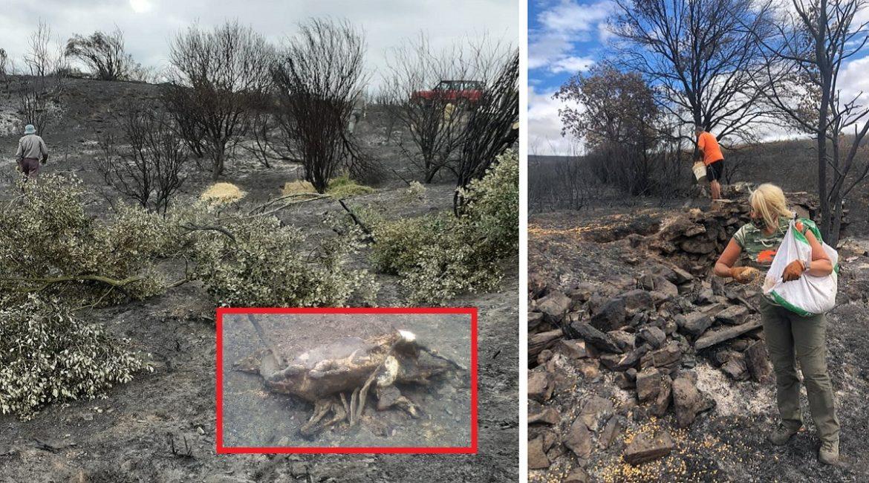 Los cazadores siguen dando ejemplo: llevan comida y refugio a los animales afectados por otro incendio