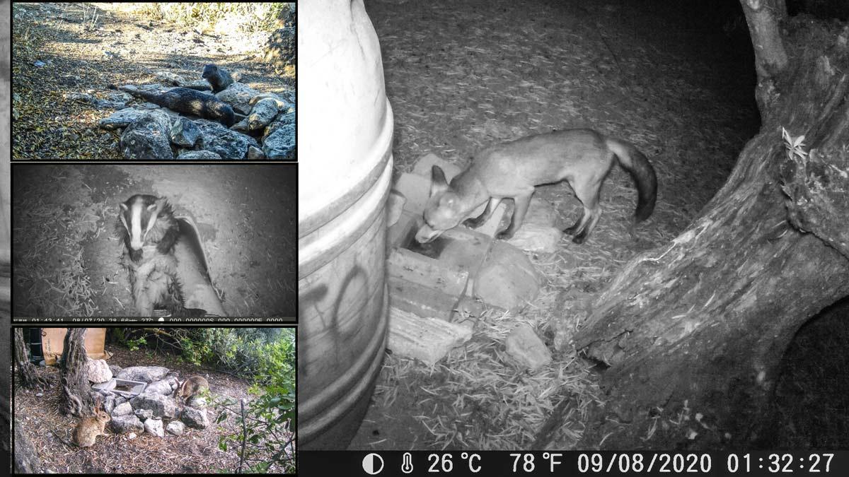 Colocan cámaras trampa en varios cotos de caza y descubren lo que los cazadores hacen con los animales