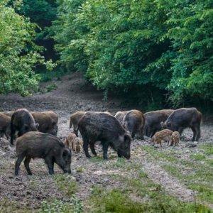 Los cazadores catalanes explotan: Casi 1.000 sociedades son llamadas a dejar de cazar