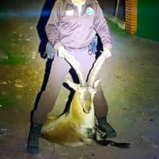 La Federación Andaluza de Caza consigue una condena ejemplar contra un furtivo