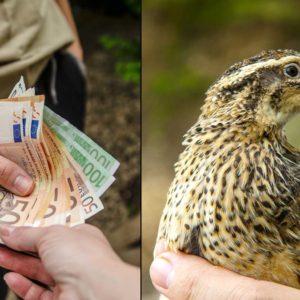 Los ecologistas reciben un millón de euros públicos mientras los cazadores invierten 500.000 en conservación