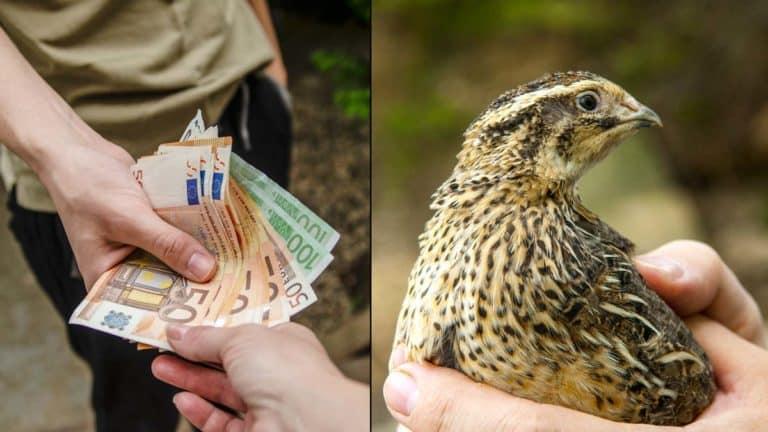 Ecologistas vs cazadores. ©Shutterstock