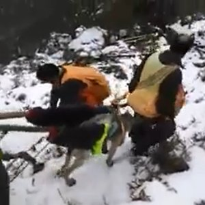 Cazadores improvisan una camilla en el monte para salvar a un perro herido