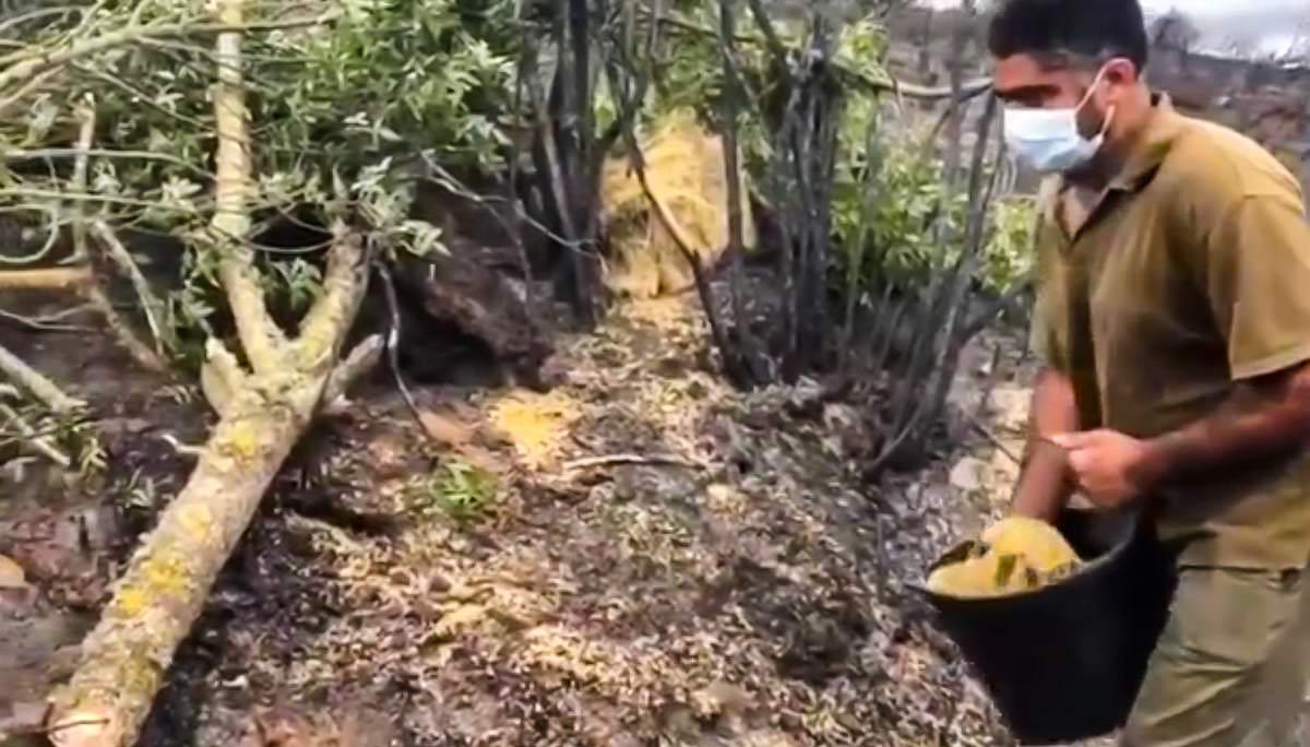 Los cazadores, los únicos que llevan agua y comida a los animales tras el incendio de Zamora