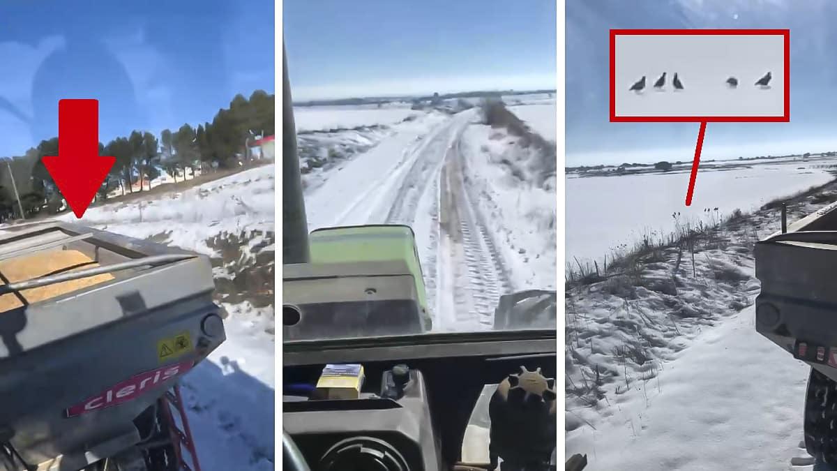 Cazadores de Albacete compran 5.000 kilos de comida para salvar de la inanición a la fauna tras la nevada