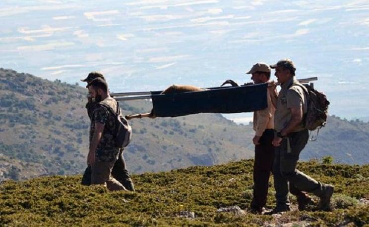 Cazadores andaluces rescatan a un macho montés ciego