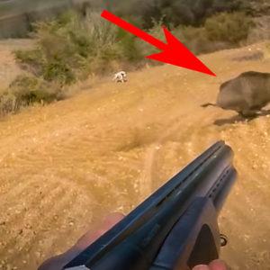 Tres cazadores van a la menor cuando les sorprende este tremendo jabalí