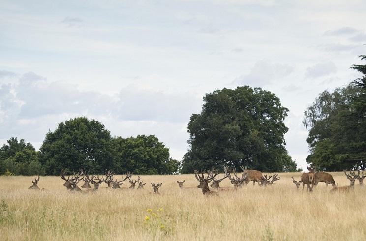Un coto pide permiso para cazar ciervos y le autorizan a 'espantarlos'