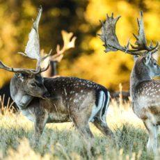 Mañana se prohibirá cazar en Parques Nacionales: los españoles tendrán que pagar 320 millones de euros por ello