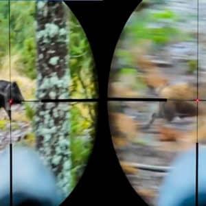 Este vídeo muestra a la perfección cómo cazar a un jabalí a la carrera