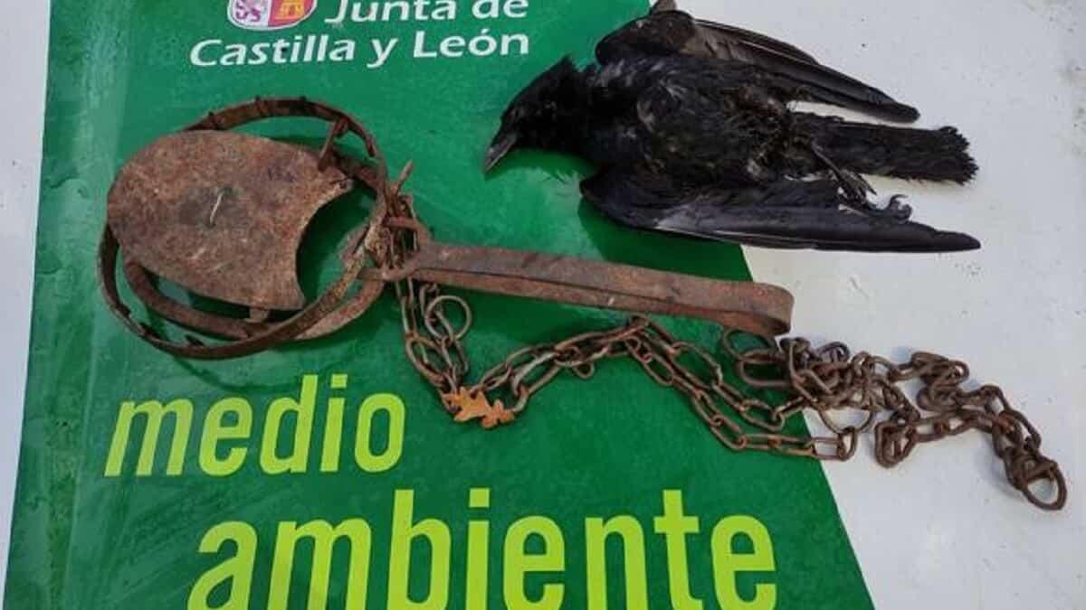 La Guardia Civil hace una 'espera' a un furtivo y lo pilla poniendo un cepo: le puede caer hasta 300.000 euros