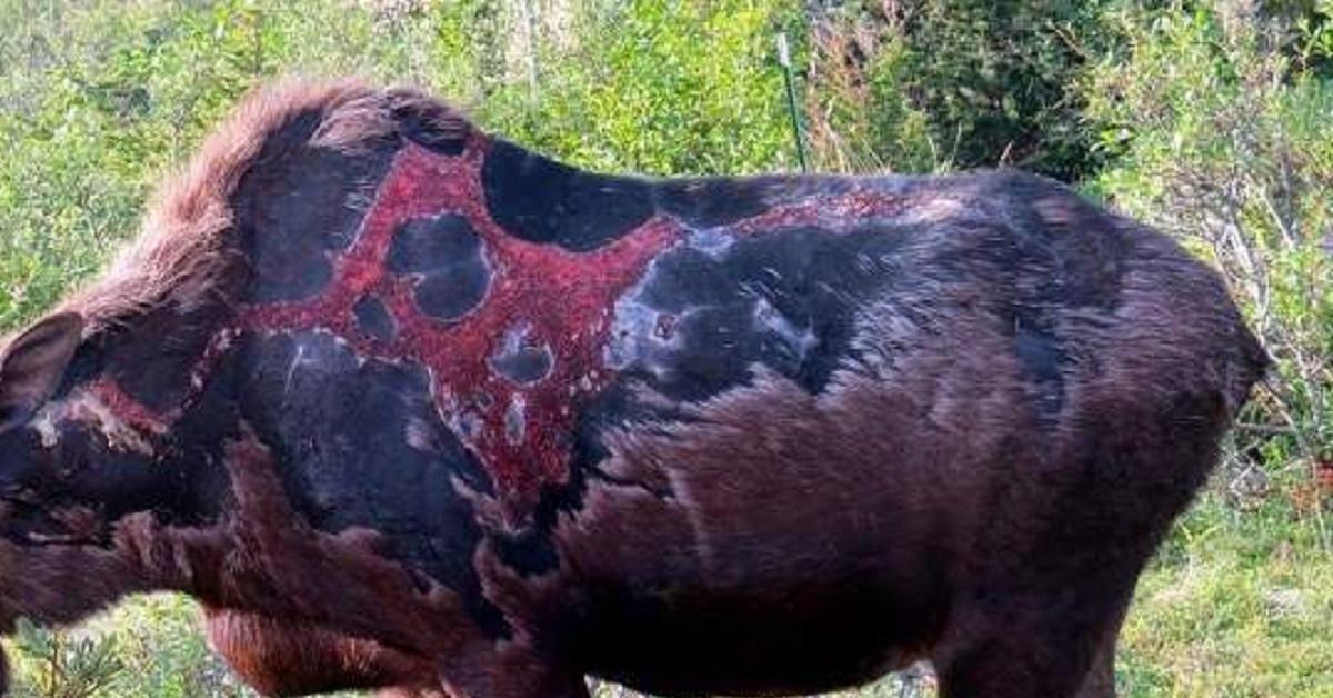 Estas fotos de un cérvido 'zombie' revolucionan las redes sociales