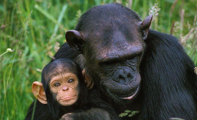 Foto: Los animales más inteligentes del planeta. GTRES.