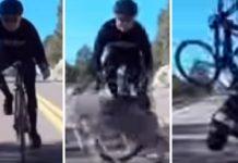 ciclista se accidenta con un ciervo