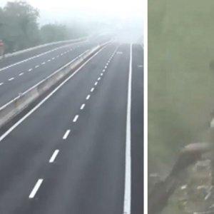 Cierran 25 kilómetros de una autovía para dar un ojeo de jabalíes y corzos