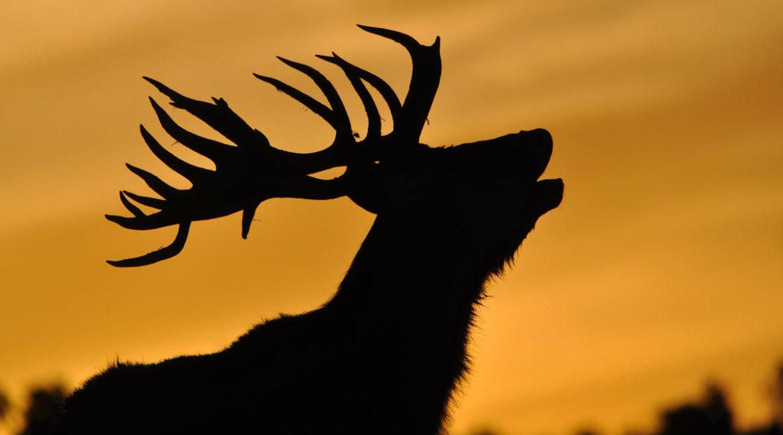 Muere un agente de medio ambiente que acompañaba a un cazador en un rececho de ciervo