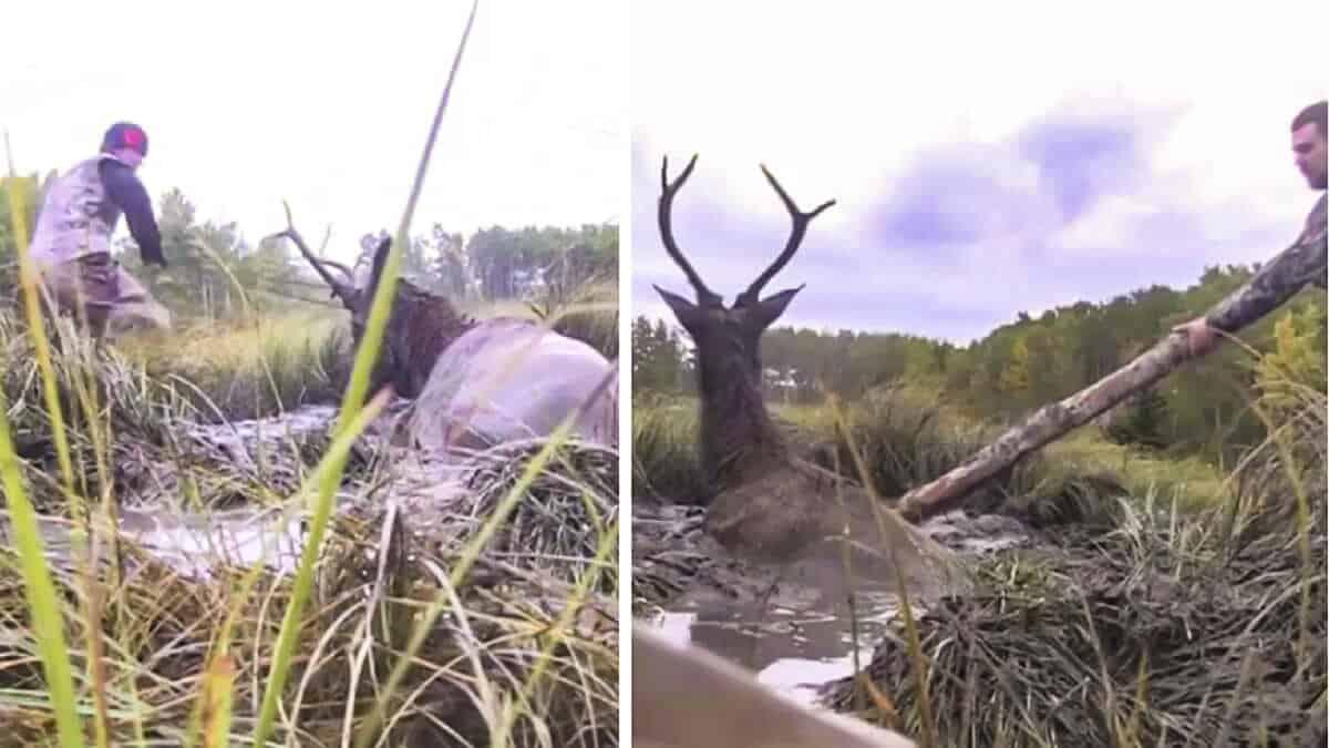 Dos cazadores encuentran a un ciervo atrapado en el fango y reaccionan de este modo