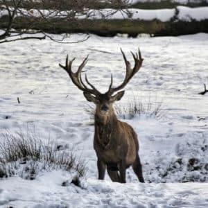 La nieve cubrirá parte de España en Nochevieja: consulta si tu coto de caza se verá afectado