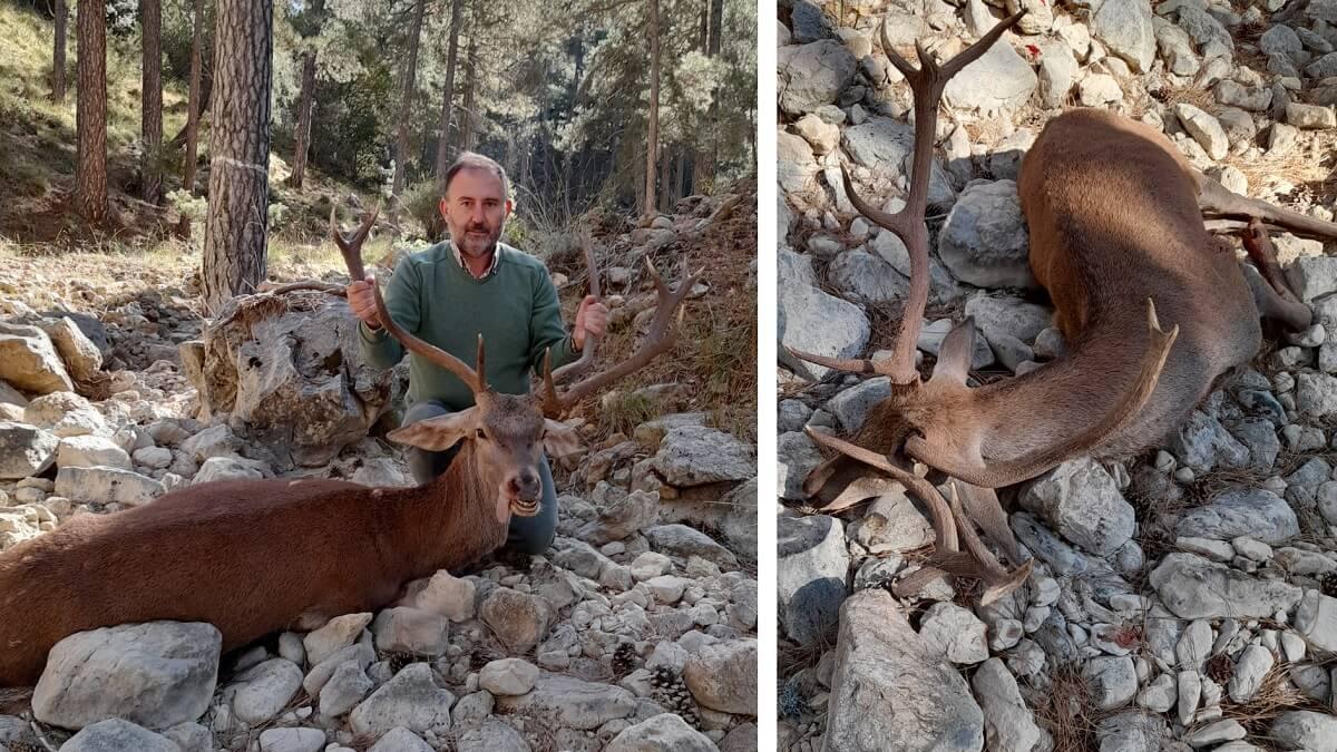 Cazado un extraño ciervo de tres cuernas en el Parque Natural de Cazorla