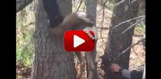 ciervo-atrapado-entre-dos-arboles