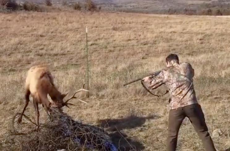 Un cazador dispara a un ciervo atrapado en una maraña de alambres
