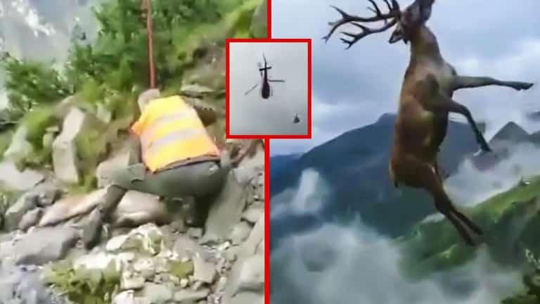 Ciervo sacado con un helicóptero