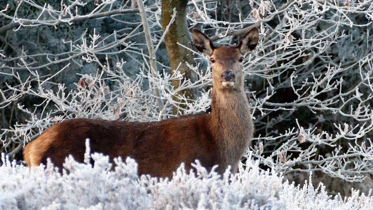 ADECANA solicita autorización para alimentar a los animales afectados por la nieve