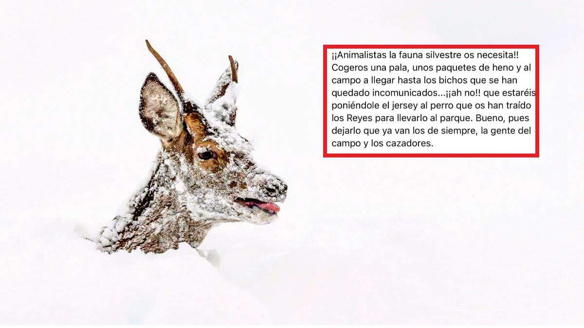 'Invita' a los animalistas a ayudar a la fauna en la nieve y 10.000 personas comparten su mensaje