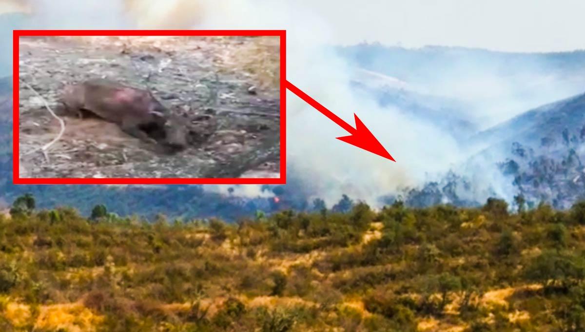 Imagen del cievo quemado en el incendio de Huelva.