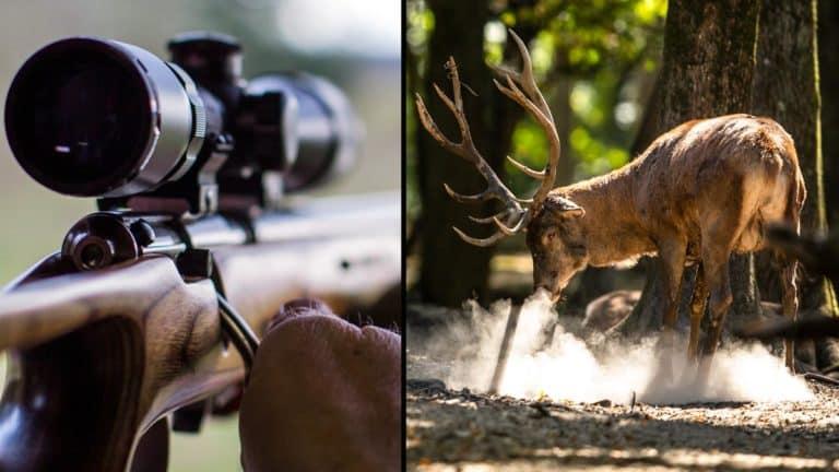 Cazador con su rifle y ciervo. ©Shutterstock