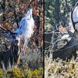 Este ciervo de Zamora paga las consecuencias de arrojar basura al monte