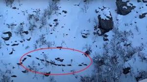 El monte tras Filomena: graba cómo varios ciervos se abren paso entre la nieve