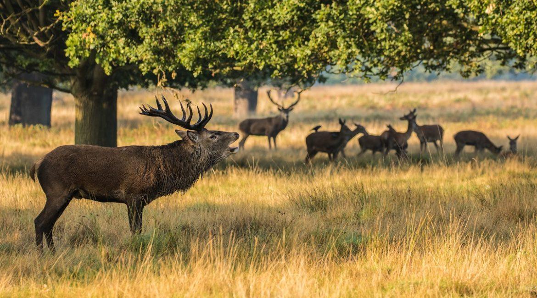 FEDEXCAZA destina 300.000 euros de ayudas para proyectos de investigación que ayuden a la caza en Extremadura