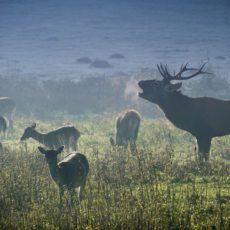 Los pueblos de Monfragüe se niegan a prohibir la caza en el Parque Nacional