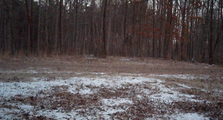 Te proponemos un reto: encuentra los seis ciervos escondidos