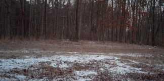 ciervos-escondidos