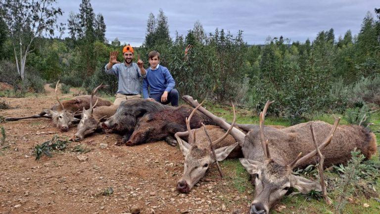 ciervos jabalíes