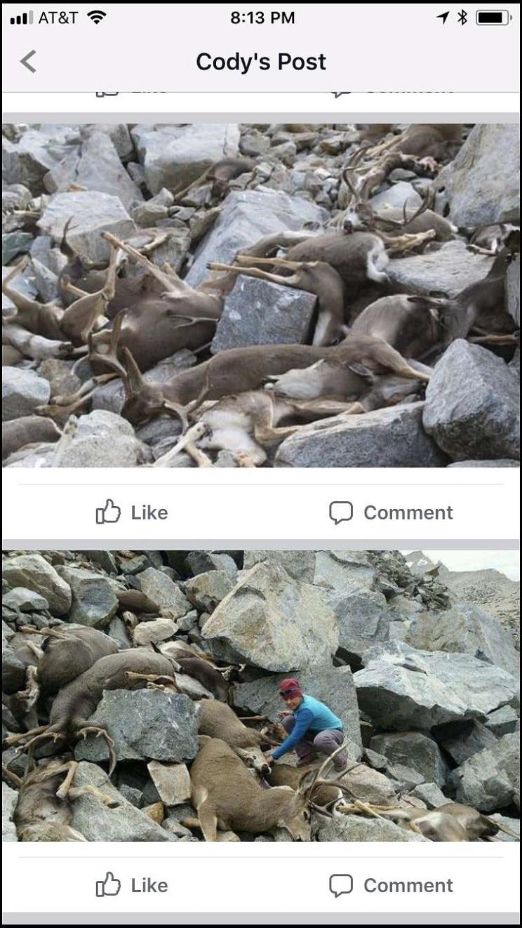 ciervos muertos en extrañas circunstancias