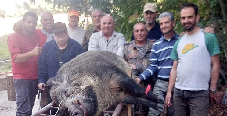 Cazan un enorme jabalí de 240 kilos en Italia