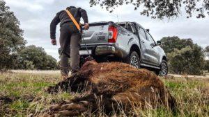 Cómo hacer una correa para sacar las piezas de caza mayor del campo