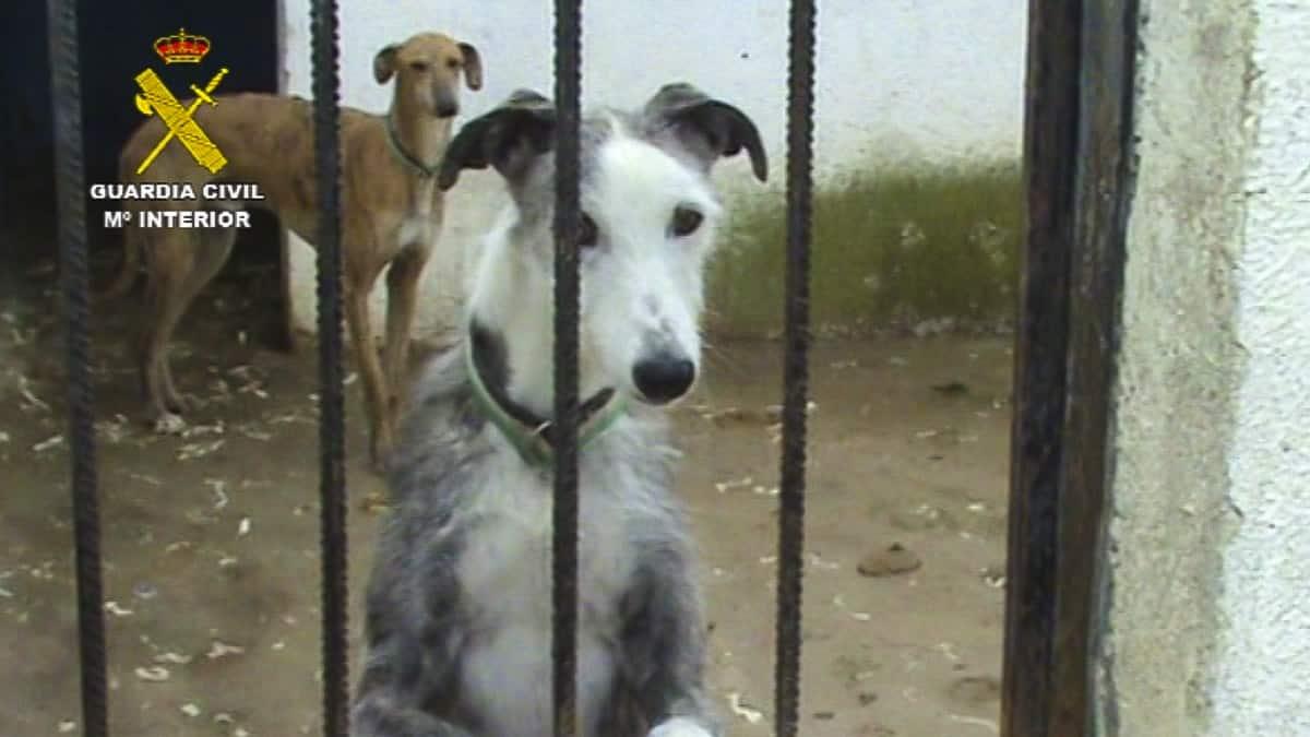 Clausurada una perrera clandestina e intervenidos un centenar de perros en Parla