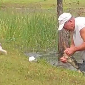 Un hombre rescata a su perro de la boca de un caimán que se lo estaba comiendo