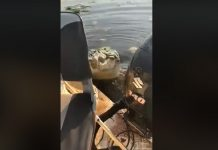 cocodrilo ataca pescadores