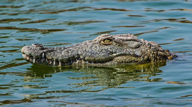Impiden a cazadores y pescadores participar en la búsqueda del cocodrilo de 250 kilos de Valladolid