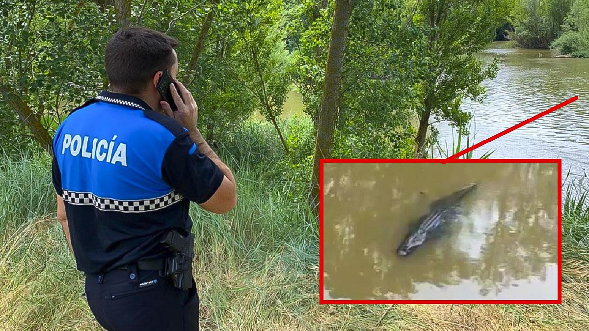 Avistado un cocodrilo en Valladolid: Policía y Guardia Civil tratan de 'cazar' al reptil