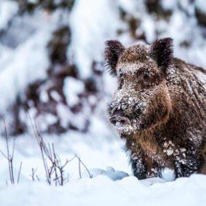 Tres consejos de cazadores para ayudar a la fauna salvaje durante el temporal de nieve