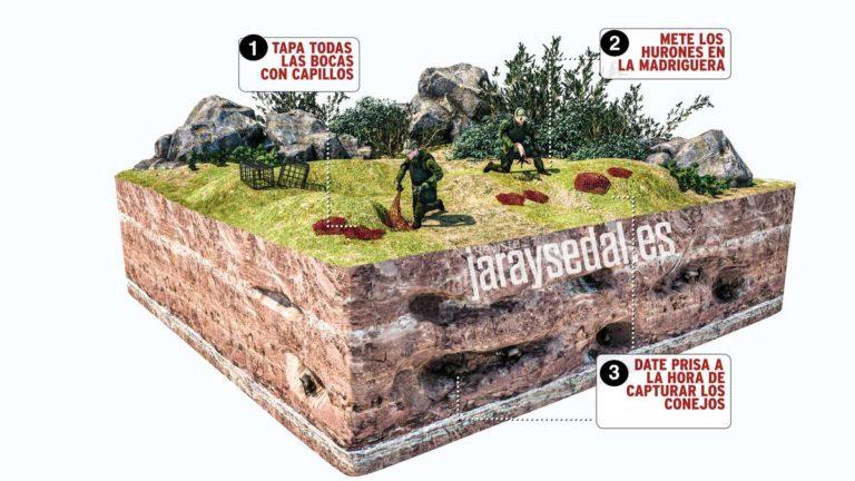 Infografía que explica cómo cazar conejos con hurón y capillo. © Jara y Sedal